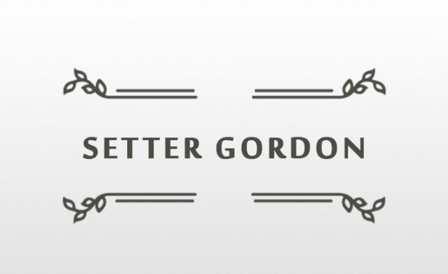 LA TAGLIA NEL SETTER GORDON- Accurata panoramica sull'argomento dell'Esperto Giudice ed allevatore Dott. Michele Ivaldi tratta dalla letteratura cinofila e dalla lettura degli standard morfologici della  razza.