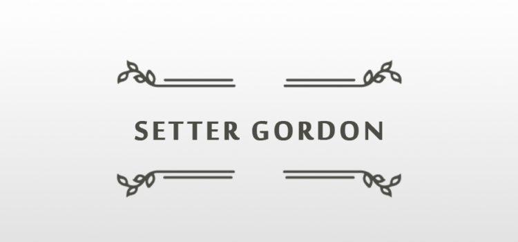 LA SQUADRA DEL CAMPIONATO EUROPEO CACCIA A STARNE 2019 SETTER GORDON