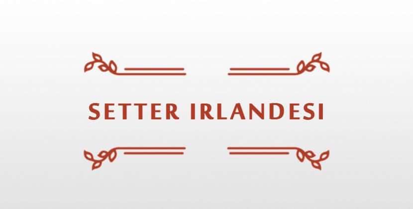 Tesseramento setter irlandesi club 2019