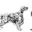INTERVISTA A GIACOMO GIORGI, ALLEVAMENTO DI CROCEDOMINI: IL PIONIERE DELLE PROVE DI MONTAGNA